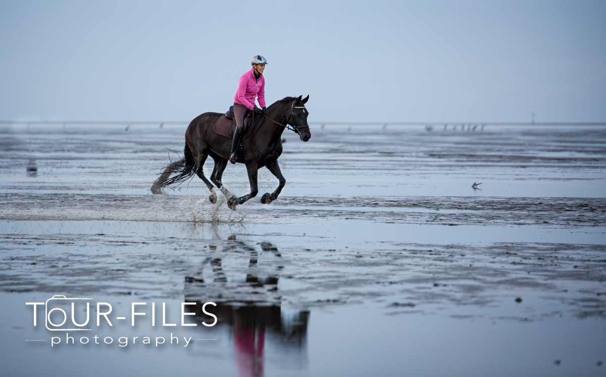 Tierfotograf Pferd Wattenmeer