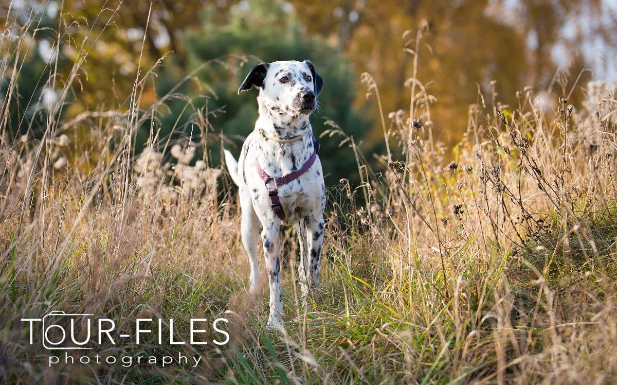Schöne Hunde-Fotografie in schöne Umgebung
