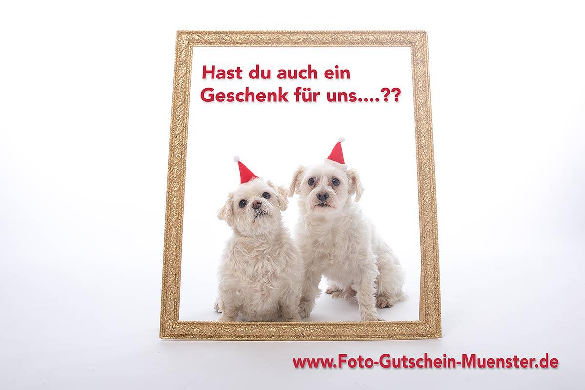Fotograf Münster - Geschenkgutschein für Fotos