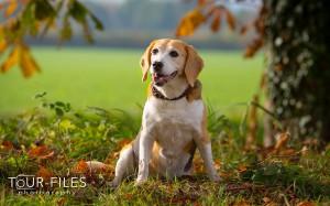 Hunde-Fotografie - Tierphoto NRW