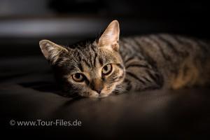 Tierfotograf Katze